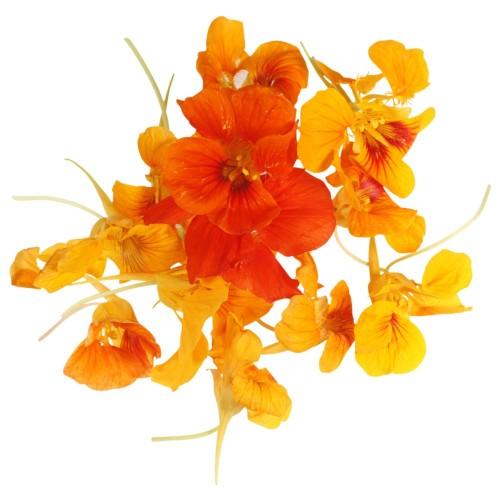 orange_nastertions
